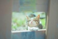猫の写真①